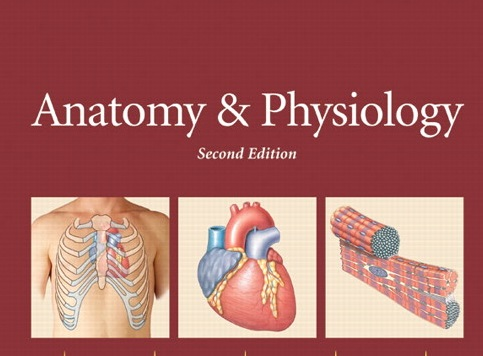 Anatomy and Physiology (5275) (Miss ANNE MARGARET BOTOR)