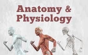 Anatomy and Physiology of Human Movement